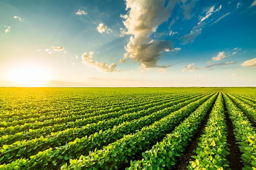 Αύξηση των ελέγχων μη σωστής κατανομής των αγροτικών ενισχύσεων